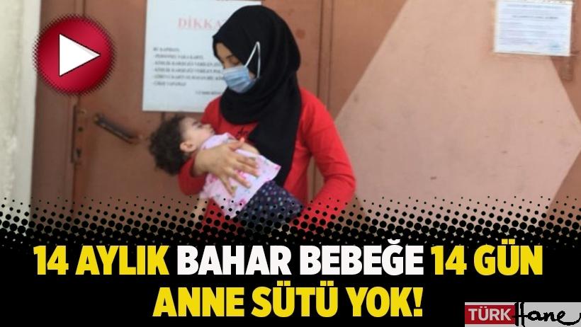 14 aylık Bahar bebeğe 14 gün anne sütü yok!